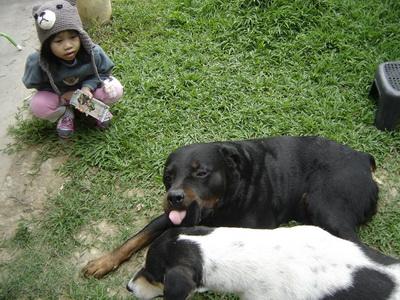 น้องเทียนกับน้องหมา